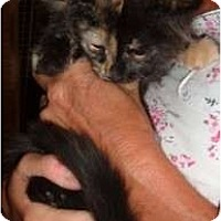 Adopt A Pet :: Carlita - Troy, OH