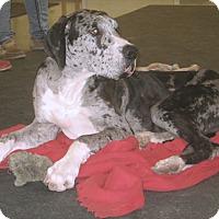 Adopt A Pet :: Bo #2 - Martinsburg, WV