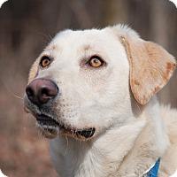 Adopt A Pet :: Reggie - Lewisville, IN