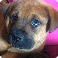 Adopt A Pet :: Mocha - Knoxville, TN