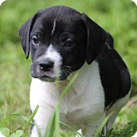 Adopt A Pet :: Raindrop - Austin, TX