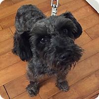 Adopt A Pet :: Garrett - Redondo Beach, CA