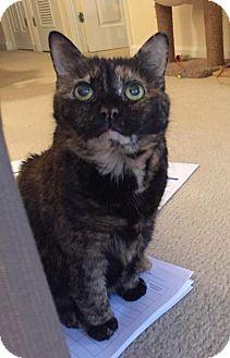 Domestic Shorthair Cat for adoption in Herndon, Virginia - Gracie - Torti
