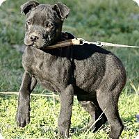 Adopt A Pet :: Alexey - Plainfield, CT