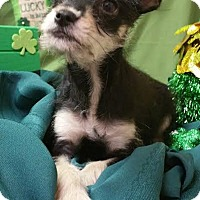 Adopt A Pet :: Pedro - Modesto, CA