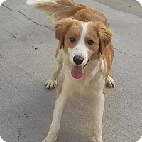 Adopt A Pet :: Dakota*ADOPTED!* - Chicago, IL