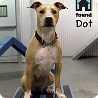 Adopt A Pet :: Dot - Chicago, IL