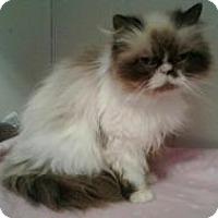Adopt A Pet :: Buttercup - Crocker, MO