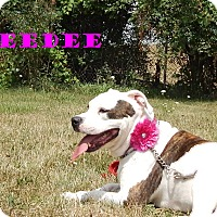Adopt A Pet :: DeeDee Darling - Bucyrus, OH