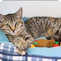 Adopt A Pet :: Whirlamatwirl - San Luis Obispo, CA