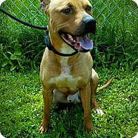 Adopt A Pet :: Parez - Cherry Valley, NY