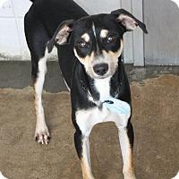 Adopt A Pet :: Bart - Beaumont, TX