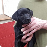 Kyi Leo Dog for adoption in Pikeville, Kentucky - Bev