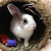 Adopt A Pet :: Skittles - Paramount, CA