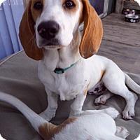 Adopt A Pet :: Ansa - san diego, CA