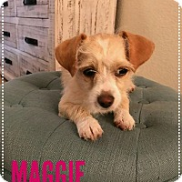 Adopt A Pet :: Maggie – 1 year Cairn Terrier - Mesa, AZ