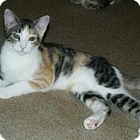 Adopt A Pet :: Alice  Female - knoxville, TN