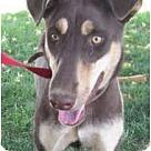 Adopt A Pet :: Keisha