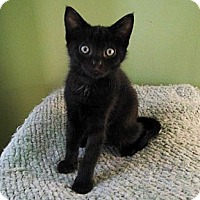 Adopt A Pet :: June - Irvine, CA