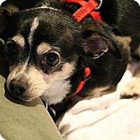 Adopt A Pet :: Sally2 - Lynnwood, WA