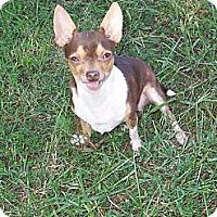 Adopt A Pet :: Tupelo - Lexington, TN