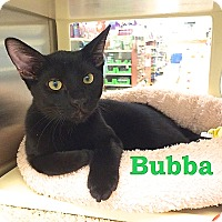 Adopt A Pet :: Bubba - Foothill Ranch, CA