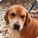 Adopt A Pet :: Gus