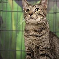 Adopt A Pet :: Banzai Jr - Chino, CA