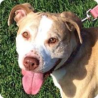 Adopt A Pet :: Lorena - Redondo Beach, CA