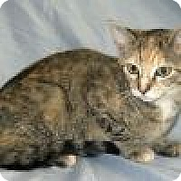 Adopt A Pet :: Bethina - Powell, OH