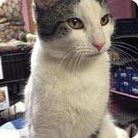 Adopt A Pet :: Brendan - Milford, MA