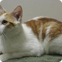 Adopt A Pet :: Elmer - Suffolk, VA