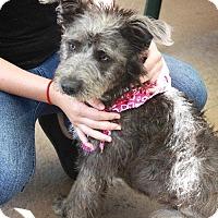Adopt A Pet :: Beni - San Francisco, CA