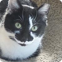 Adopt A Pet :: Sketchers - Glen Mills, PA