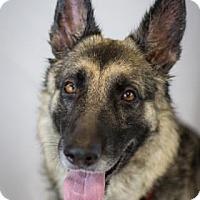 Adopt A Pet :: Indie - Bradenton, FL