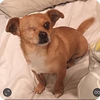 Adopt A Pet :: Charm - Anaheim, CA