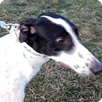 Adopt A Pet :: Moe - Florence, KY