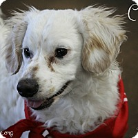 Adopt A Pet :: Curly - Rockwall, TX