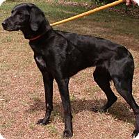 Adopt A Pet :: Ethel - Muskegon, MI