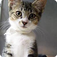 Adopt A Pet :: The Catch - Bradenton, FL
