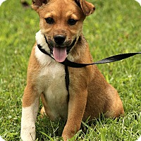 Adopt A Pet :: Lizzy - Hagerstown, MD