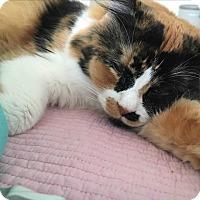 Adopt A Pet :: Jjing Jjing (JJ) - Pasadena, CA