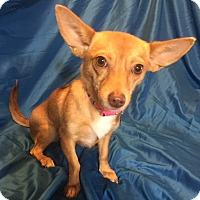 Adopt A Pet :: Zooey - San Leandro, CA