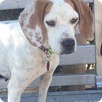 Adopt A Pet :: Liberty  (ETAA) - Washington, DC