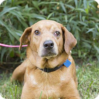 Labrador Retriever Mix Dog for adoption in Houston, Texas - Daisy