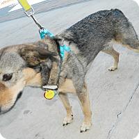Adopt A Pet :: Sheila - Umatilla, FL