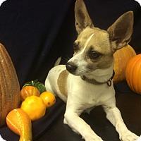Adopt A Pet :: Ziggy - Tavares, FL