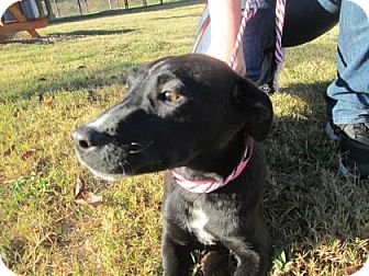 Retriever (Unknown Type)/Labrador Retriever Mix Dog for adoption in Cumming, Georgia - Loretta