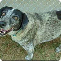 Adopt A Pet :: Sissy - Ocean Ridge, FL