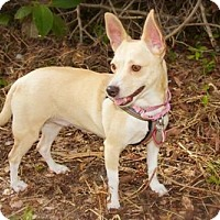 Adopt A Pet :: Meadow - Davie, FL